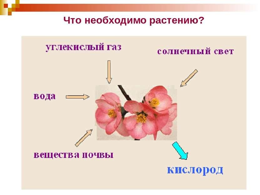 Что необходимо растению?