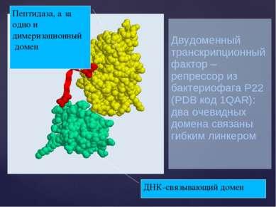 Двудоменный транскрипционный фактор – репрессор из бактериофага P22 (PDB код ...