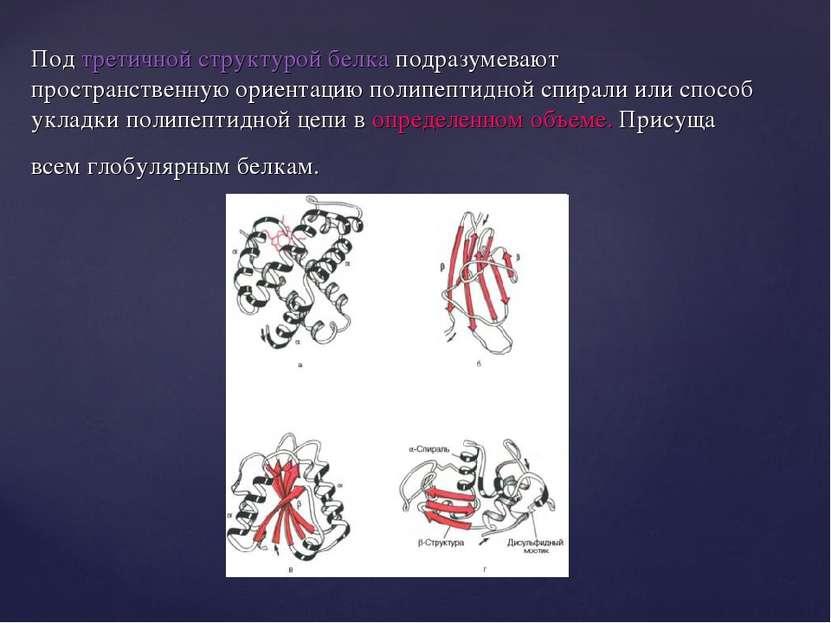 Под третичной структурой белка подразумевают пространственную ориентацию поли...