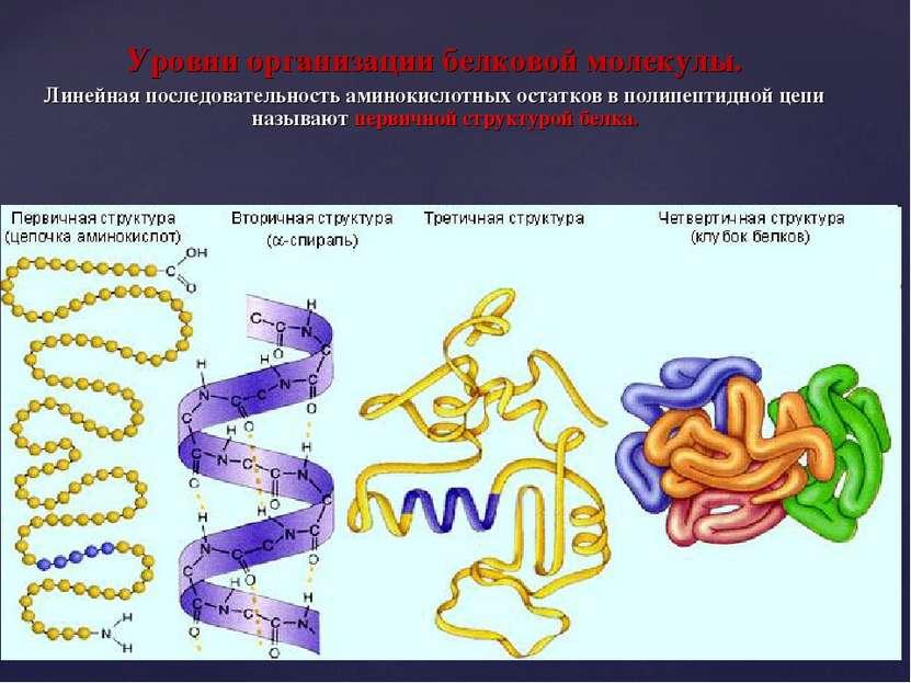 Уровни организации белковой молекулы. Линейная последовательность аминокислот...