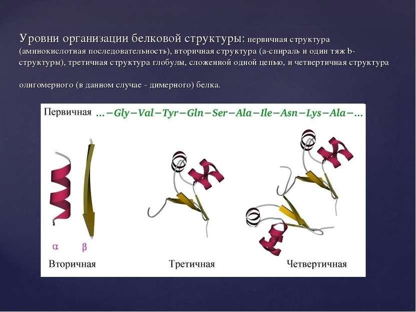 Уровни организации белковой структуры: первичная структура (аминокислотная по...