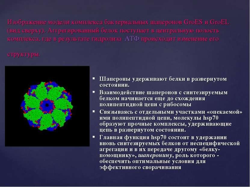 Изображение модели комплекса бактериальных шаперонов GroES и GroEL (вид сверх...