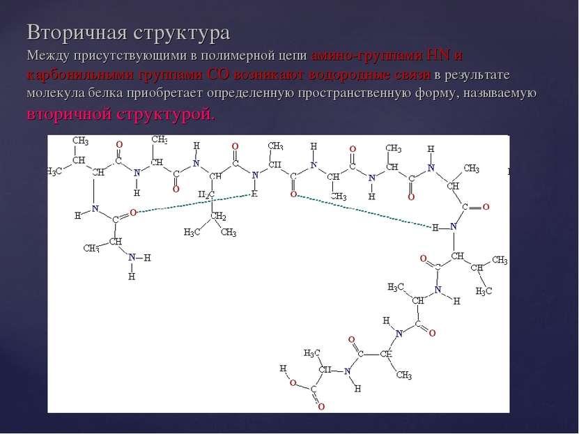 Вторичная структура Между присутствующими в полимерной цепи амино-группами HN...