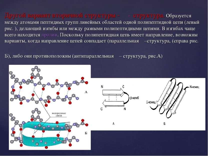 Другой вариант вторичной структуры - β - структура. Образуется между атомами ...