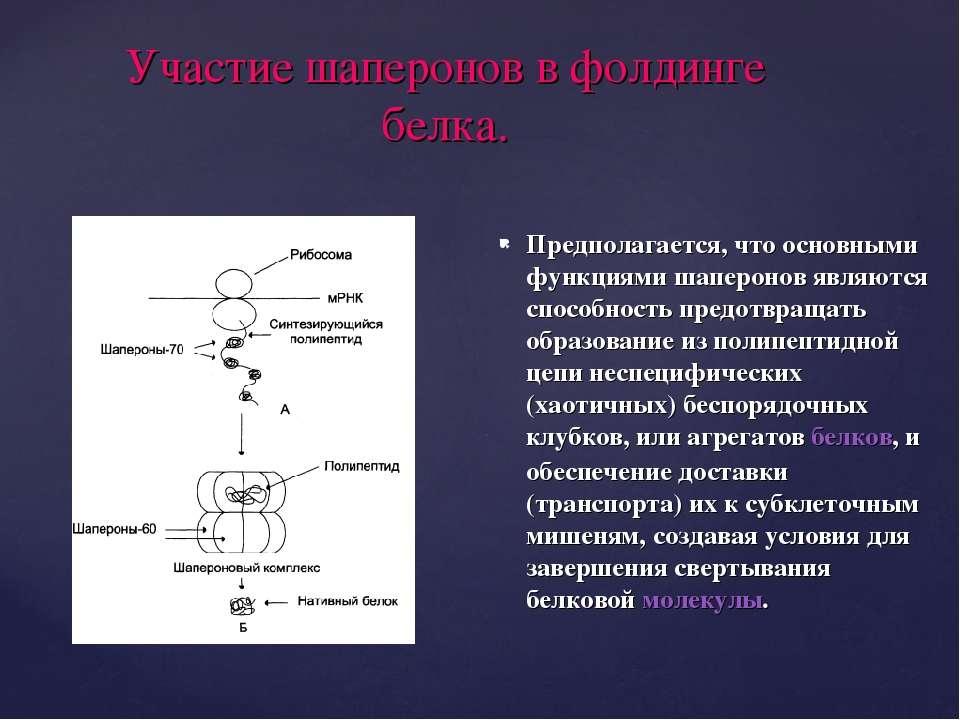 Участие шаперонов в фолдинге белка. Предполагается, что основными функциями ш...