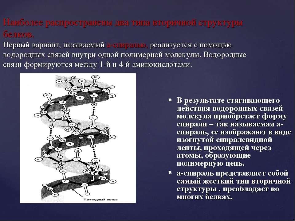 Наиболее распространены два типа вторичной структуры белков. Первый вариант, ...