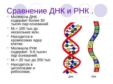Сравнение ДНК и РНК . Молекула ДНК содержит более 30 тысяч пар оснований МR =...
