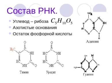 Состав РНК. Углевод – рибоза Азотистые основания Остаток фосфорной кислоты