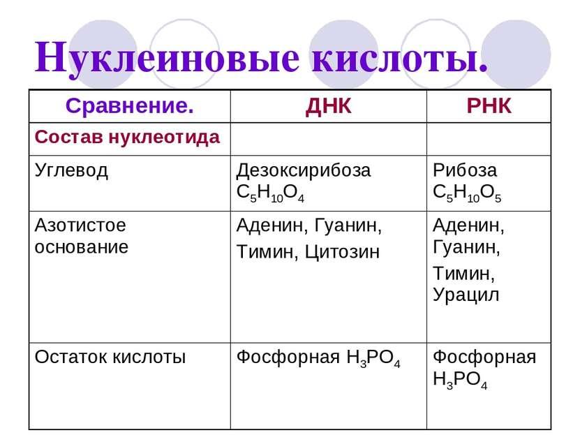 Нуклеиновые кислоты.