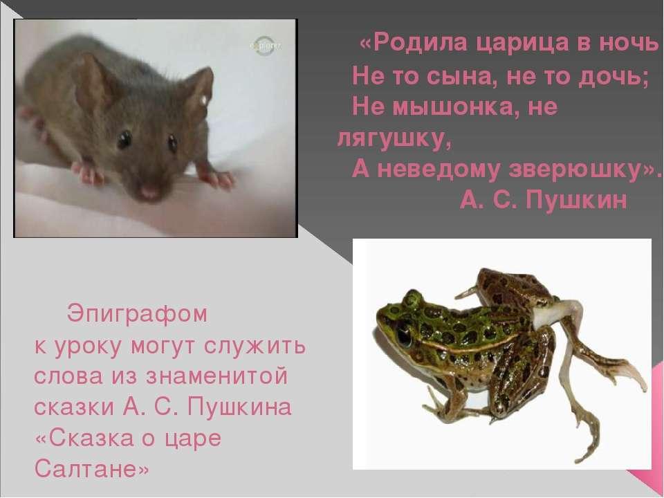Эпиграфом к уроку могут служить слова из знаменитой сказки А. С. Пушкина «Ска...