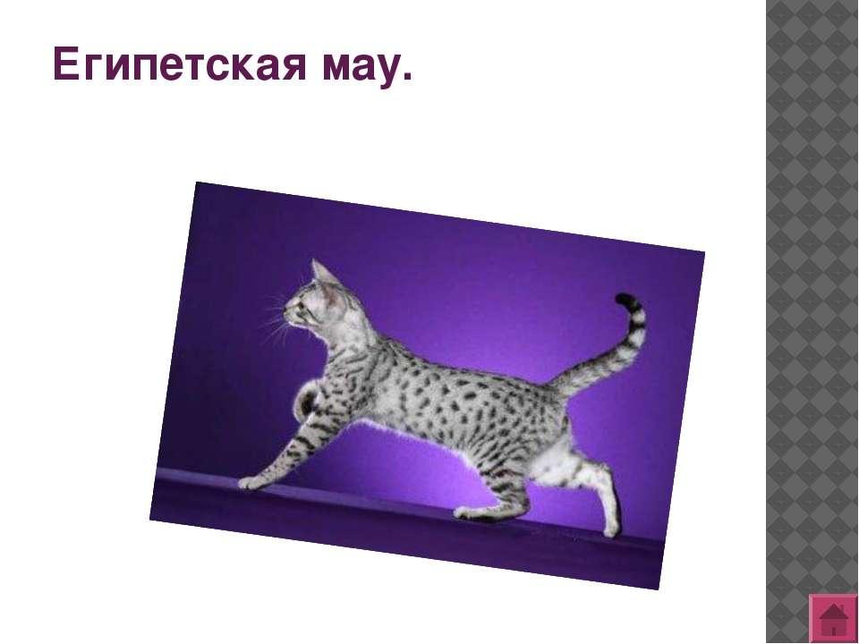 Литература: http://images.yandex.ru/ http://www.murlika.msk.ru/porodi.php