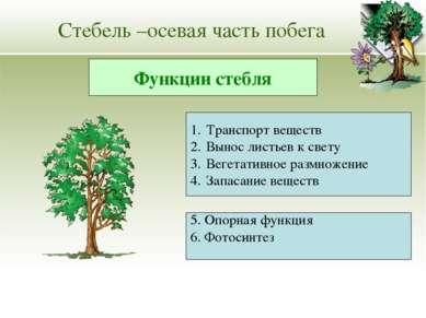 Стебель –осевая часть побега Транспорт веществ Вынос листьев к свету Вегетати...