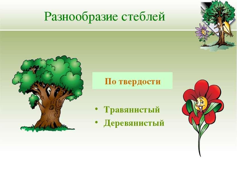 Разнообразие стеблей Травянистый Деревянистый По твердости