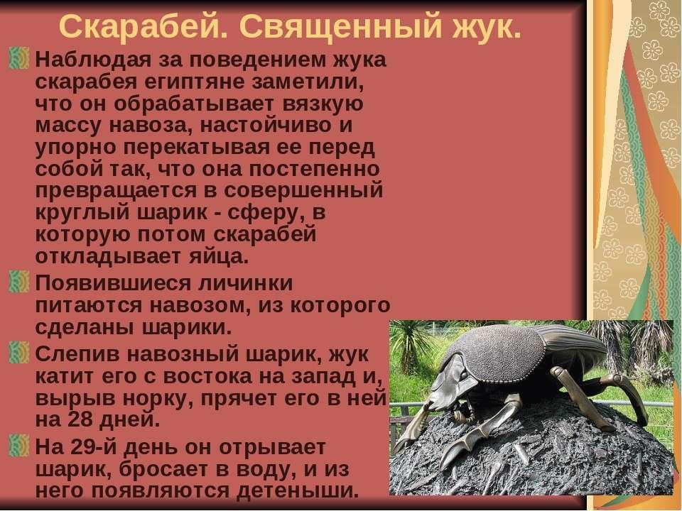 Скарабей. Священный жук. Наблюдая за поведением жука скарабея египтяне замети...