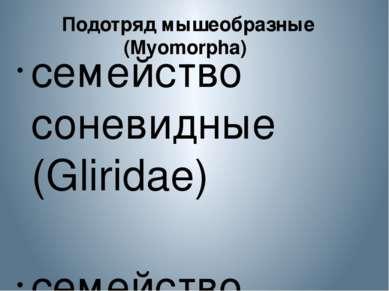 Подотряд мышеобразные (Myomorpha) семейство соневидные (Gliridae) семейство...