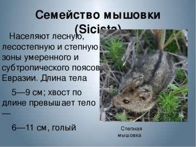 Семейство мышовки (Sicista) Населяют лесную, лесостепную и степную зоны умере...