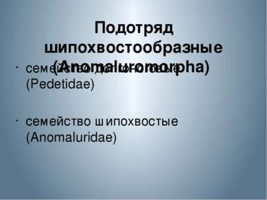 Подотряд шипохвостообразные (Anomaluromorpha) семейство долгоноговые (Pedeti...