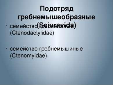 Подотряд гребнемышеобразные (Sciuravida) семейство гребнепалые (Ctenodactylid...