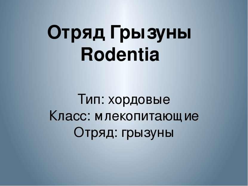 Отряд Грызуны Rodentia Тип: хордовые Класс: млекопитающие Отряд: грызуны