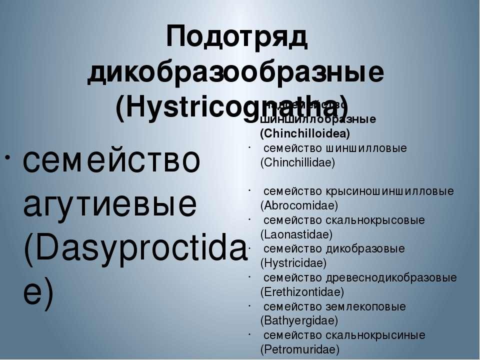 Подотряд дикобразообразные (Hystricognatha) семейство агутиевые (Dasyproctid...