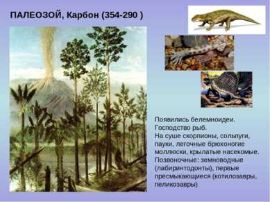 ПАЛЕОЗОЙ, Карбон (354-290 ) Появились белемноидеи. Господство рыб. На суше ск...