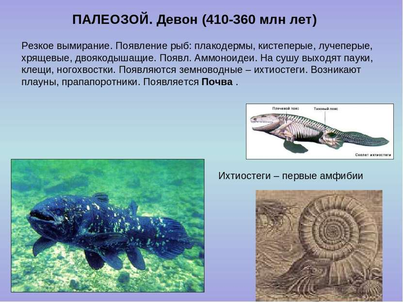 ПАЛЕОЗОЙ. Девон (410-360 млн лет) Ихтиостеги – первые амфибии Резкое вымирани...