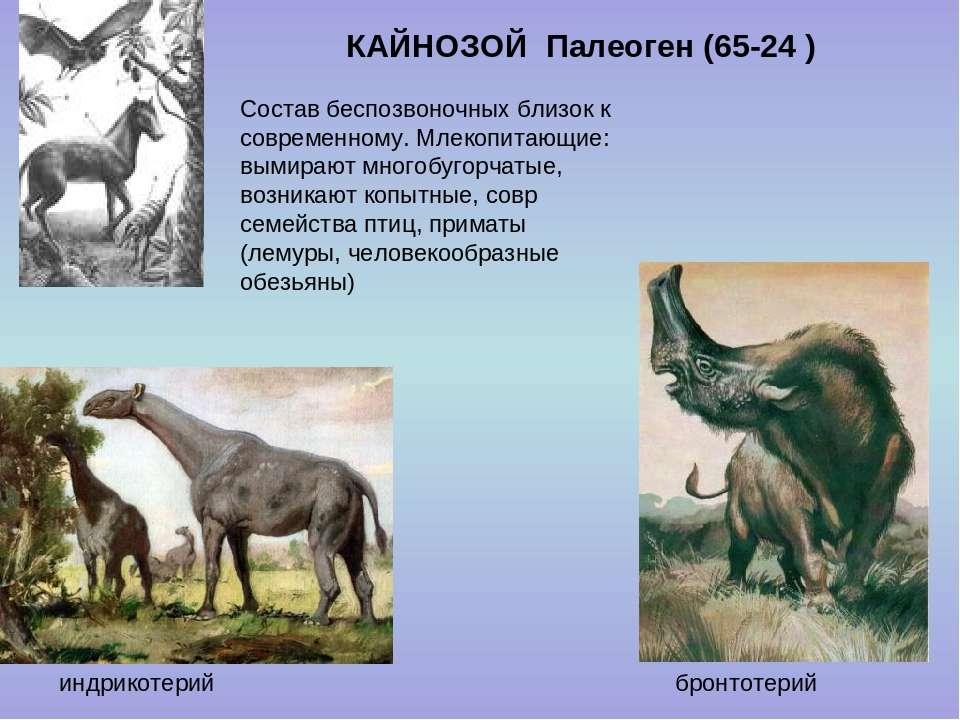 КАЙНОЗОЙ Палеоген (65-24 ) бронтотерий индрикотерий Состав беспозвоночных бли...