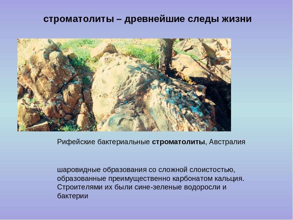 строматолиты – древнейшие следы жизни шаровидные образования со сложной слоис...