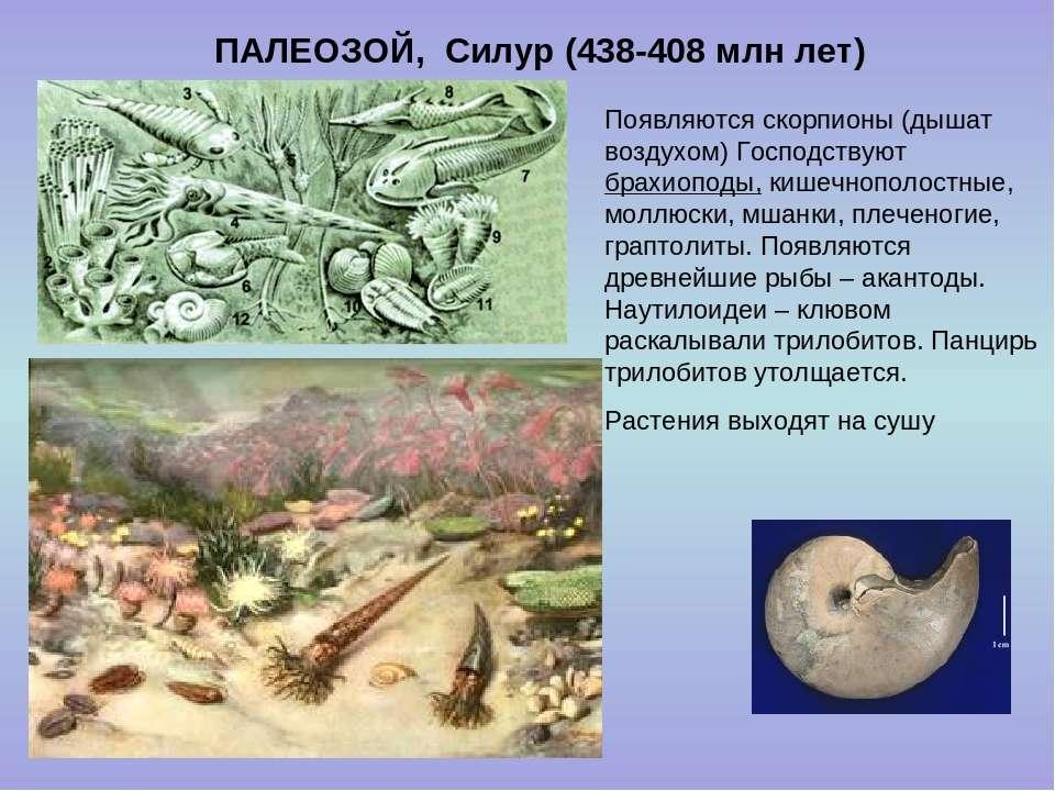 ПАЛЕОЗОЙ, Силур (438-408 млн лет) Появляются скорпионы (дышат воздухом) Госпо...