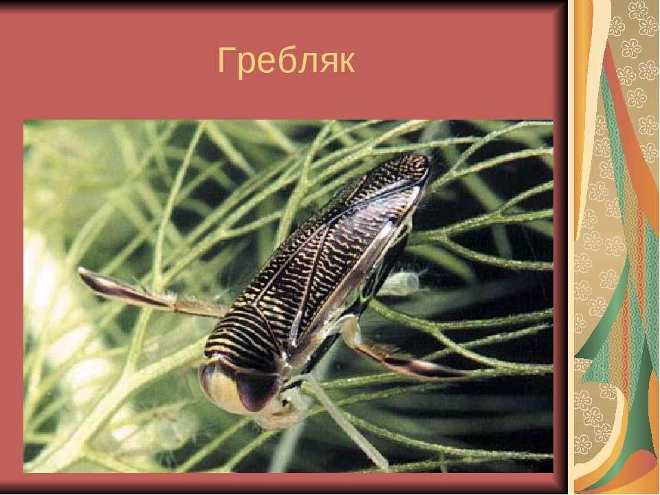 Гребляк