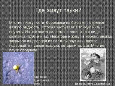 Где живут пауки? Многие плетут сети; бородавки на брюшке выделяют вязкую жидк...
