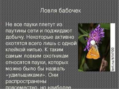 Ловля бабочек Не все пауки плетут из паутины сети и поджидают добычу. Некотор...