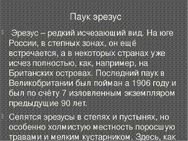 Паук эрезус Эрезус – редкий исчезающий вид. На юге России, в степных зонах, о...