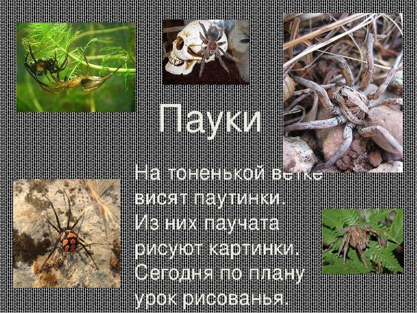 Пауки На тоненькой ветке висят паутинки. Из них паучата рисуют картинки. Сего...