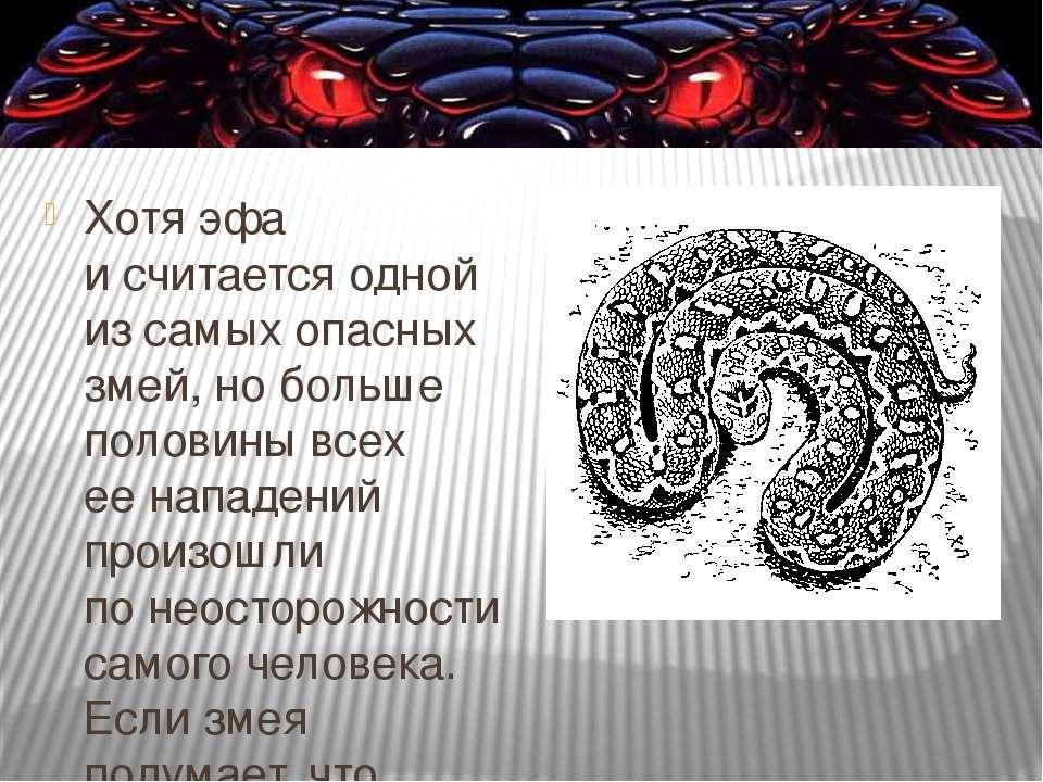Хотя эфа исчитается одной изсамых опасных змей, нобольше половины всех ее...
