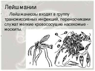 Лейшмании Лейшманиозы входят в группу трансмиссивных инфекций, переносчиками ...