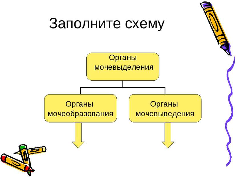 Заполните схему