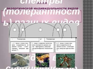 Закон экологической индивидуальности видов был сформулирован в 1924 г. русски...