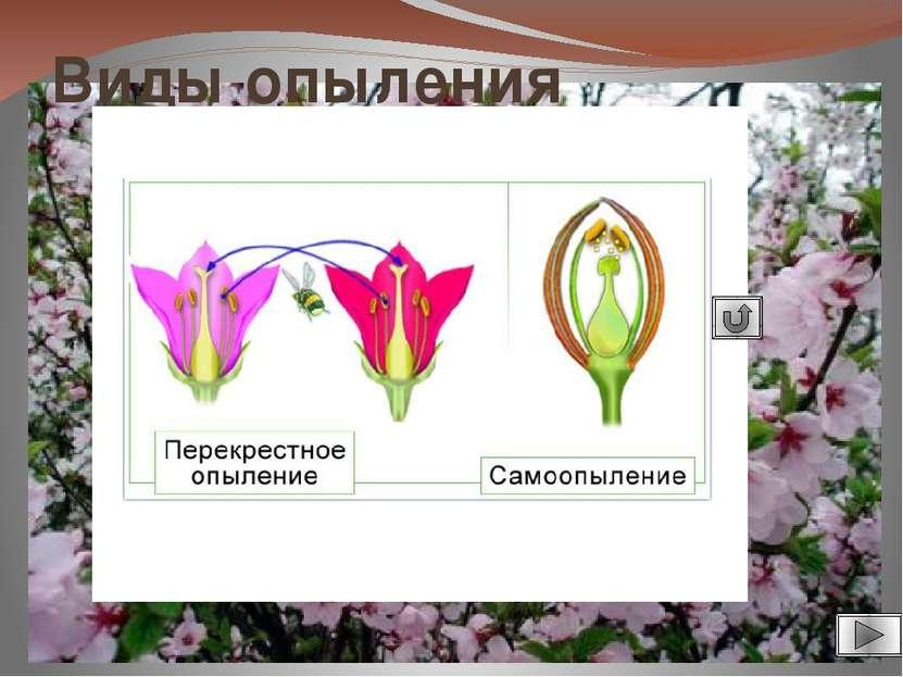 Использованные источники информации. 1. Калинина А.А. Поурочные разработки по...
