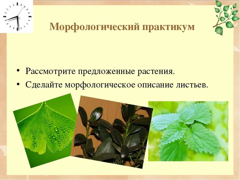 Морфологический практикум Рассмотрите предложенные растения. Сделайте морфоло...