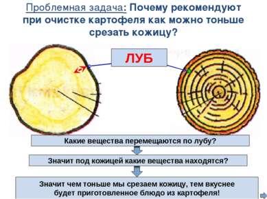 Проблемная задача: Почему рекомендуют при очистке картофеля как можно тоньше ...