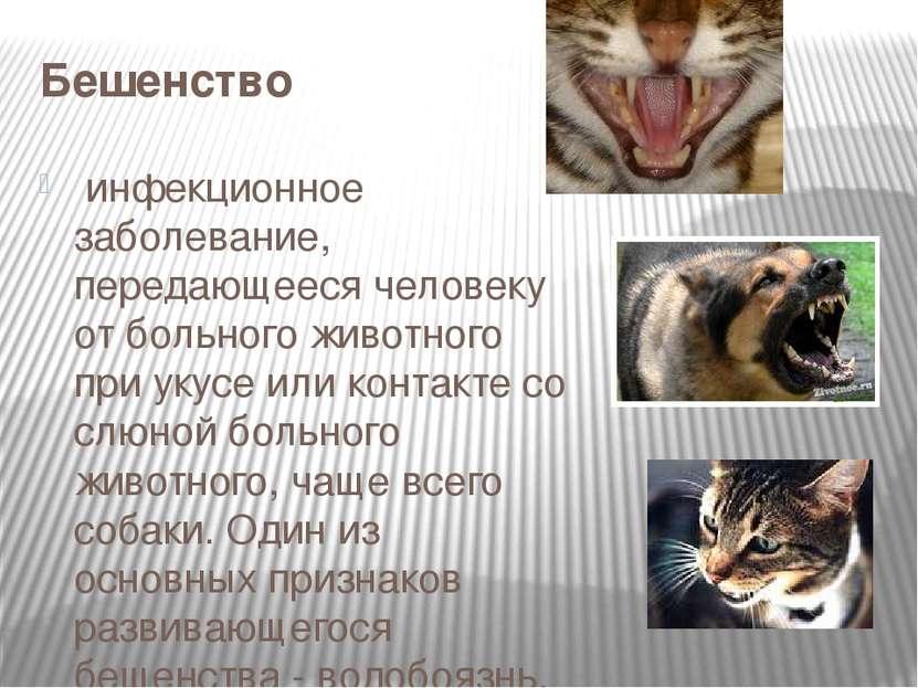 Бешенство инфекционное заболевание, передающееся человеку от больного животн...