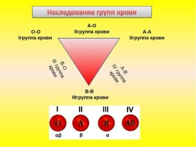 - О-О Iгруппа крови А-А IIгруппа крови В-В IIIгруппа крови В-О III группа кро...