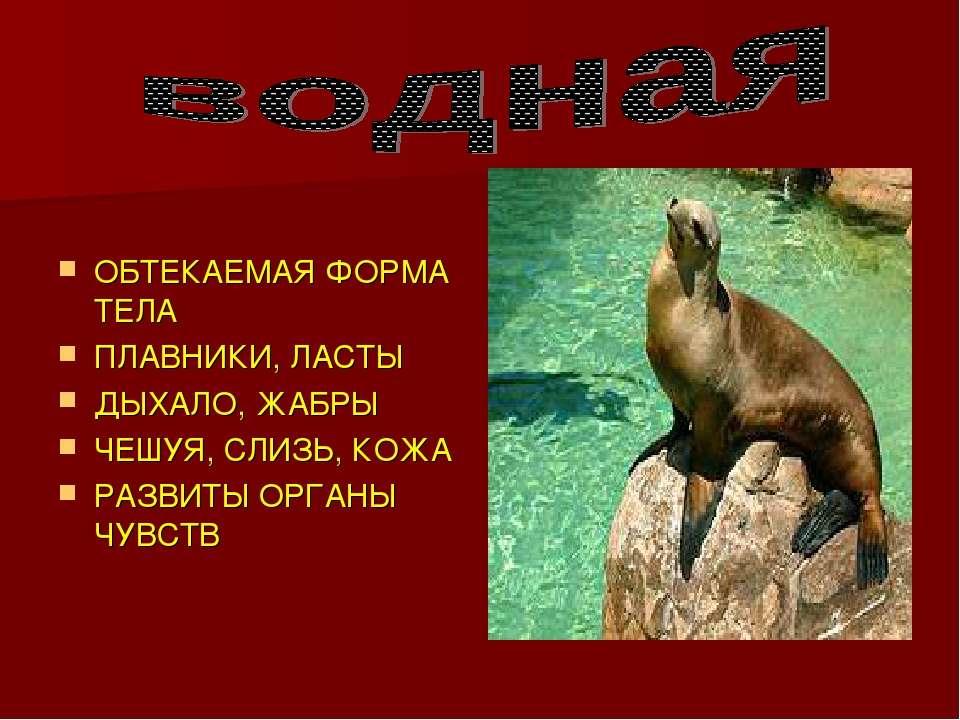 ОБТЕКАЕМАЯ ФОРМА ТЕЛА ПЛАВНИКИ, ЛАСТЫ ДЫХАЛО, ЖАБРЫ ЧЕШУЯ, СЛИЗЬ, КОЖА РАЗВИТ...