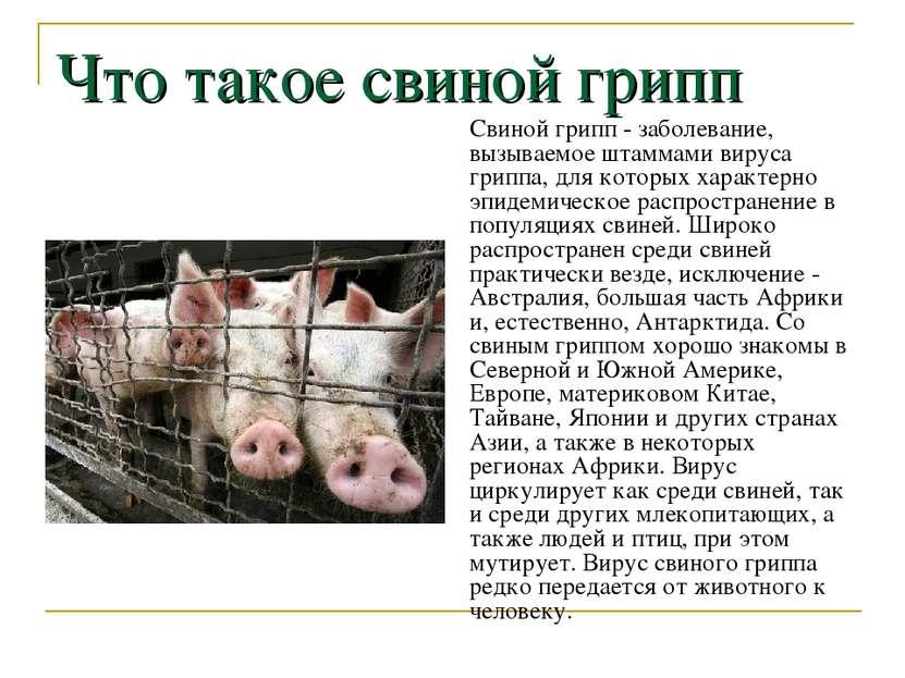 Что такое свиной грипп Свиной грипп - заболевание, вызываемое штаммами вируса...