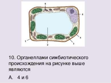 10. Органеллами симбиотического происхождения на рисунке выше являются А. 4 и...