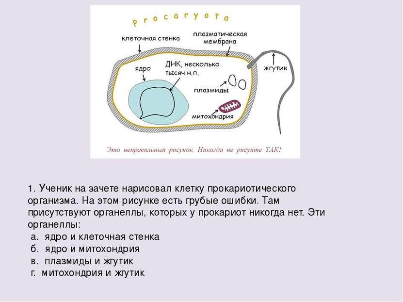 1. Ученик на зачете нарисовал клетку прокариотического организма. На этом рис...