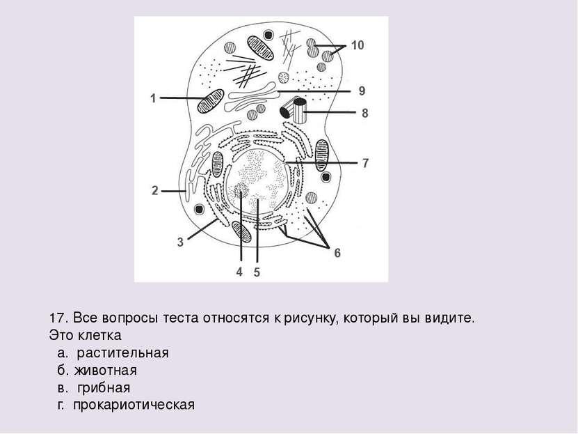 17. Все вопросы теста относятся к рисунку, который вы видите. Это клетка а. р...