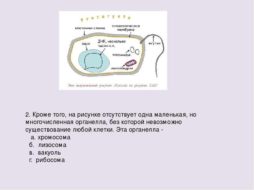 2. Кроме того, на рисунке отсутствует одна маленькая, но многочисленная орган...