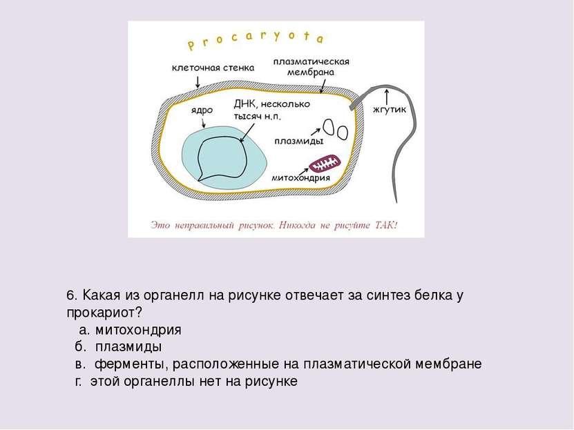 6. Какая из органелл на рисунке отвечает за синтез белка у прокариот? а. мито...